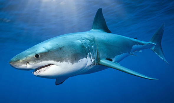 Shark attacks 2 off new york beach lifeguard times both victims had deep lacerations resembling a bite from a large fish and lifeguards reportedly removed what appeared to be a shark publicscrutiny Gallery
