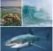Shark,Wave,Ocean,Rocks,Water,Beach